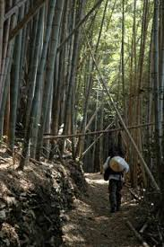 Visiting Sacred Places Of The Tohoku Region